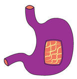 Ultraviolet stomach. Violet stomach with window throw inside Stock Photo