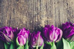 Tulips flowers background Royalty Free Stock Photography
