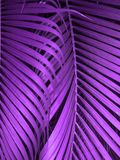 Ultraviolett bakgrund som göras av nya gröna sidor Ultraviolett bakgrund för din design Moderiktigt färgbegrepp av året royaltyfri foto