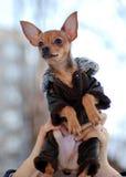 ulubiona dziewczyna wręcza chwyta szczeniaka Fotografia Royalty Free