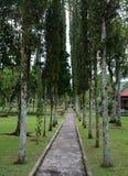 The Ulun Danu temple in Bali, Indonesia. Green trees at the Ulun Danu temple in Bali, Indonesia. Ulun Danu Temple is located at the edge of lake Bratan, Bedugul Royalty Free Stock Photography