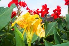 Ulun Danu temple flowers. Vivid flowers, red and yellow, Ulun Danu temple Stock Photos