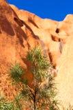 Uluru岩石和植物群细节 免版税库存照片
