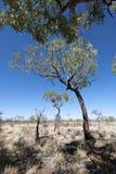 Uluru, Ayers Rock, Northern Territory. Uluru Trees, Northern Territory, Australia, 2009 Stock Photo