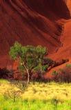 Uluru ed albero Fotografie Stock