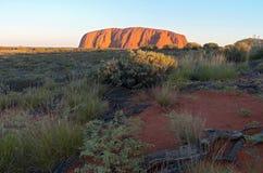 Uluru Sunrise and Desert Flora Stock Photo