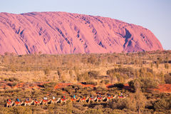 Uluru at Sunset with Camels Stock Photo