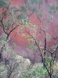 Uluru a través de los árboles Imagen de archivo libre de regalías