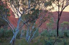 Uluru y flora del desierto Imagenes de archivo