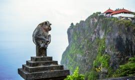 Uluwatu,巴厘岛,印度尼西亚 猴子 免版税库存照片
