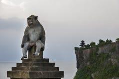 Uluwatu猴子 免版税图库摄影