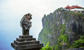 Uluwatu, Bali, Indonesia. Monkey Royalty Free Stock Photo