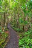 Ulvaeiland, Nieuw Zeeland Een weg door inheems bos stock afbeelding