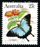 Ulysses Butterfly Australian Postage Stamp imagens de stock royalty free