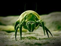 Um ácaro comum da poeira ilustração stock