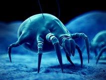 Um ácaro comum da poeira Foto de Stock