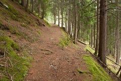 Um único trajeto da montanha racha em dois sentidos diferentes Ele ` s um o dia nebuloso outonal fotografia de stock