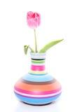 Um único tulip cor-de-rosa Imagem de Stock Royalty Free