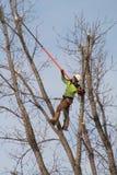 Um ajustador da árvore Fotografia de Stock Royalty Free