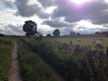 Um ajuste do campo em Inglaterra imagens de stock royalty free