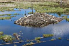 Um alojamento do castor no parque nacional da ilha dos alces, Alberta Canada Fotografia de Stock