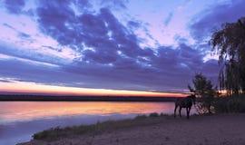 Um alvorecer dourado mágico com um contorno de uma praia do rio e de um cavalo ereto em um defocus no banco de rio foto de stock royalty free