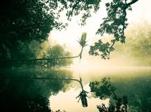 Um amanhecer de Bangladesh Imagens de Stock Royalty Free