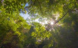 Um ambiente de refrescamento a apreciar Foto de Stock Royalty Free