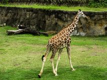 um animal original em Colômbia Pereira Risaralda imagens de stock