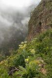 Um aqueduto velho usado agora como um vale de Guimar da fuga de caminhada da aventura Fuga na névoa através das montanhas e das c fotografia de stock royalty free
