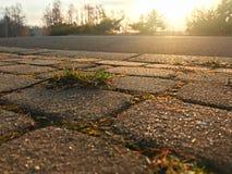 Um arbusto da grama no caminho Fotos de Stock Royalty Free