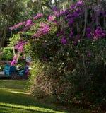 Um arbusto de florescência enorme Fotografia de Stock