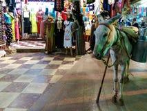 Um asno que espera seu proprietário no mercado egípcio imagem de stock