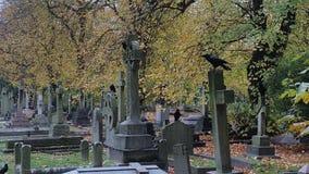 Um assassinato dos corvos Imagens de Stock Royalty Free
