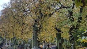 Um assassinato dos corvos Imagens de Stock