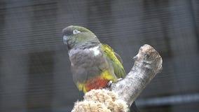 Um assento e uma vista coloridos do papagaio filme