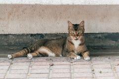 Um assento louco e agressivo do gato da rua fotos de stock royalty free