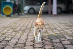 Um assento masculino bonito do gato, estabelece e andar foto de stock
