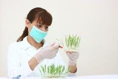 Um assistente de laboratório do feemale Foto de Stock Royalty Free