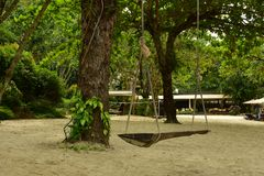 Um balanço de madeira do vintage perto da árvore grande na praia da areia fotografia de stock royalty free