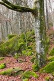 Um balanço em uma árvore Fotografia de Stock Royalty Free