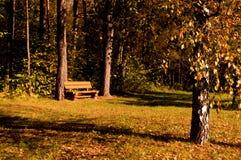 Um banco em uma floresta Foto de Stock
