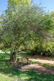Um banco quieto e calmo sob uma árvore fotos de stock