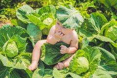 Um bebê que senta-se entre a couve As crianças são encontradas na couve Imagens de Stock Royalty Free