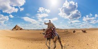 Um bedu?no em um camelo no deserto perto das pir?mides de Giza, Egito foto de stock