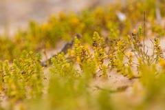 Um beira-mar pequeno, brilhante planta o crescimento na areia Cenário da praia com flora local foto de stock royalty free