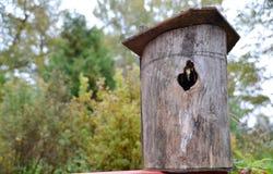Um Birdhouse na neve imagens de stock royalty free