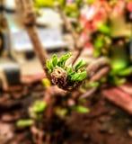 Um bockeh do ramo da árvore fotografia de stock royalty free