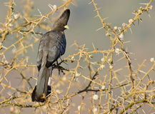 Um bonito Vai-afastado pássaro Fotos de Stock Royalty Free