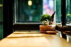 Um bonsai na tabela de madeira fotos de stock royalty free